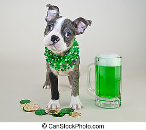 St Patricks Day Puppy - Silly Boston terrier puppy all...