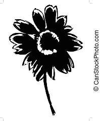 aster - silhouette of aster