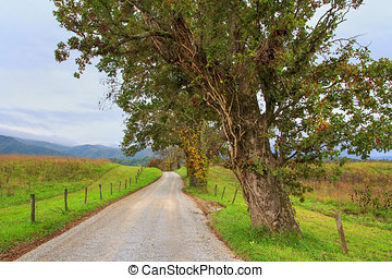 Hyatt Lane 3 - This dirt road was formerly an ancient Indian...