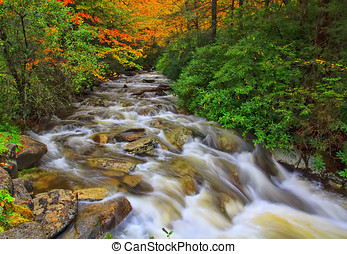 Fall Rapids - Colorful autumn leaves shelter the tumbling...