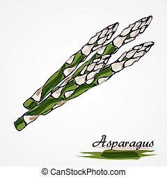 asparagus - Hand drawn vector ripe green asparagus on the...