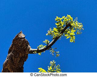 joven, retoño, en, Un, podado, árbol,