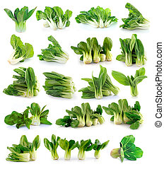 Bok choy chinese cabbage isolated on white background