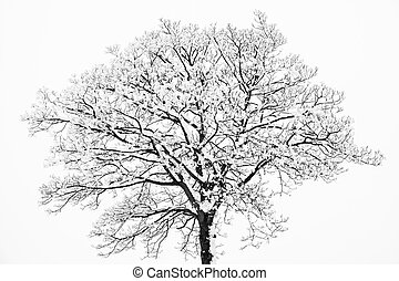 Frozen snowy trees and branches in freezing winter landscape...