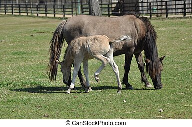 Horses on pasture Mare with foal Adolescence