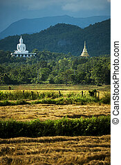 White buddha on the hill and havested rice field