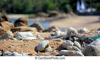 Grass on sand dune, stones and azure sea water of rocks...