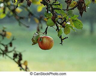 autumn fruits, southern Bohemia