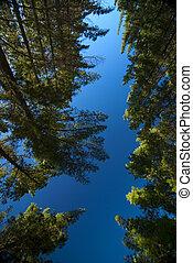 Treeline seen from below, showing blue sky in the background