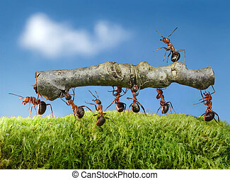 ants carry log with chief on it