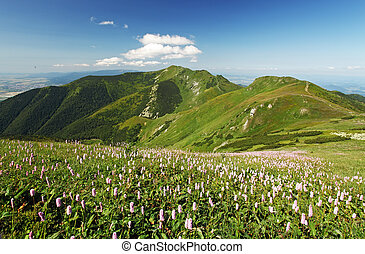 Green Mountain with wild flowers meadow - Mala Fatra