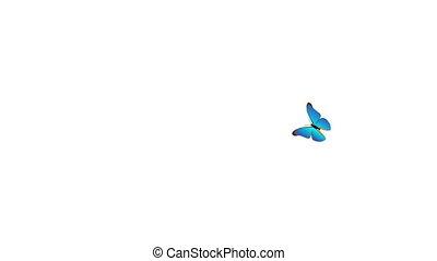 Butterfly - Cartoon butterfly