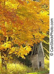 Cottage and fall foliage - Old cottage surrounded by fall...