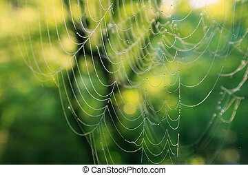 Spider web with dew drops - Morning cobweb with dew drops