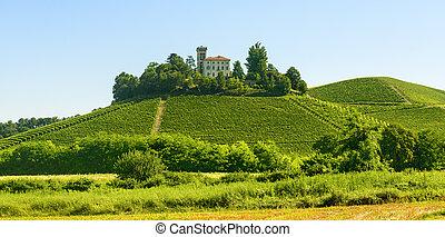 Summer landscape in Langhe (Italy) - Summer landscape in...