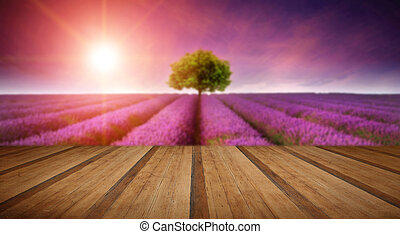 Stunning lavender field landscape Summer sunset with single...