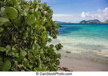 Sea Grape Leaves with Caribbean in the Background - Bright...