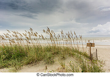 Sea Oats on Dune - Sea Oats Cover the Dunes Along the...