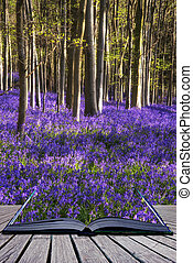 Creative concept image Stunning bluebell flowers in Spring...