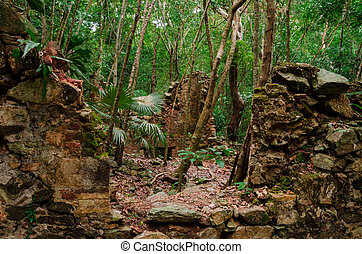 Sugar Plantation Ruins in Jungle - Ruins of an old sugar...