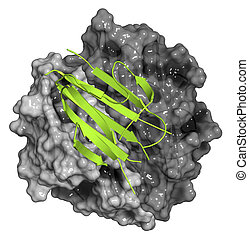 Adiponectin protein hormone. Plays role in regulation of...