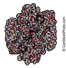 Coagulation factor XIII (FXIII, A subunits), molecular...