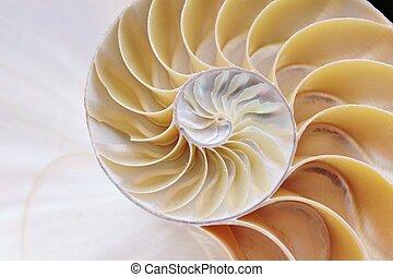 sezione trasversale, conchiglia,  nautilus