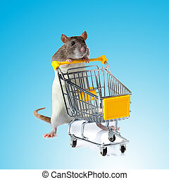 Rat with shopping cart  on blue background. concept for pet shop