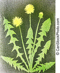 Blooming dandelions. Spray painting technique.