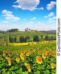 sunflower field - Spring landscape with sunflower field and...