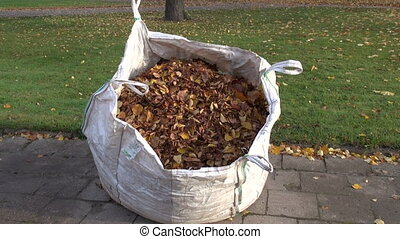 sack of autumn dried leaves in park - big plastic sack of...