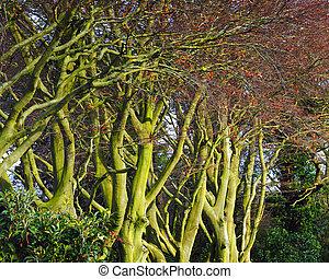 Tree Trunks - Tree trunks in winter