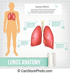 Vector lungs infographics banner