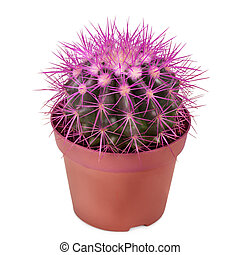 cactus planted in a flower pot isolated on white background