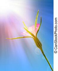 Wild flower under sun ray