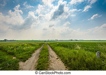 Lanscape - Summer landscape with road,green corn field and...