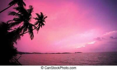 Palm tree silhouette at sunset on tropical beach Koh Samui....