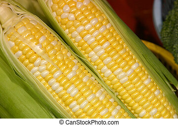close up of some fresh sweet corn in a market