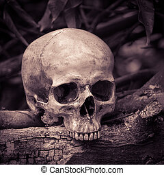 Skull on ashes - Still life with human skull on ashes in the...