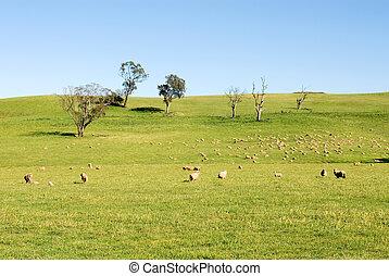 Rural Scene - A rural scene, captured near Taralga in New...