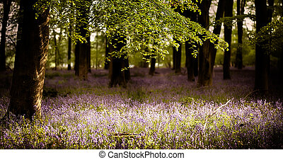 Bluebells in the wood with sunlight
