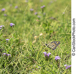 Green Grass Background with Butterfly