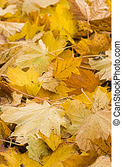 Yellow leaves in autumn - vertical