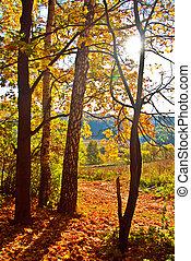 Autumn forest - Sunshine in Autum Forest