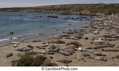 Time lapse zoom out seals - Time lapse zoom out of a huge...