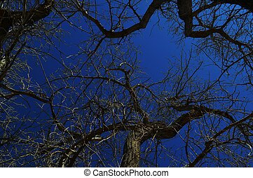 Dormant Blue - winter trees with