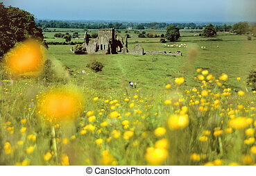 Castle ruin within green meadows at the Rock of Cashel,...