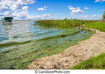 Blue-green algae contamination - 2014 Alberta Lac Ste. Anne...