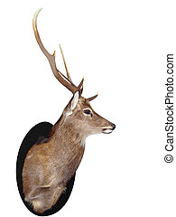 Seven Point Stag Head isolated with clipping path