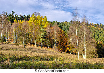 Edge of forest during the autumn